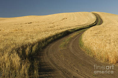 Photograph - Road Through Wheat Field by John Shaw