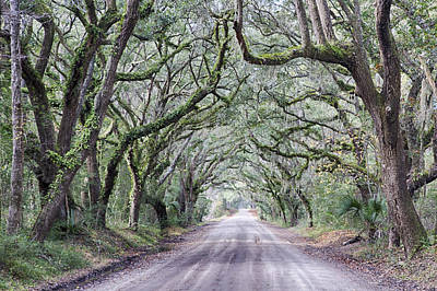 Road To Botany Bay Art Print
