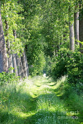 Photograph - Road To Bruges by Carol Groenen