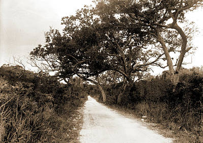 Miami Drawing - Road To Cocoanut Grove I.e by Litz Collection