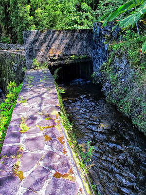 Photograph - Road To Hana 25 by Dawn Eshelman