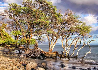 Photograph - Road To Lahaina 26 by Dawn Eshelman