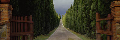 Gravel Road Photograph - Road, Tuscany, Italy by Panoramic Images