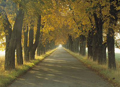 Road Wautumn Trees Sweden Print by Panoramic Images