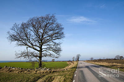 Photograph - Road With Single Bare Tree by Kennerth and Birgitta Kullman