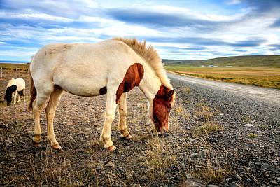 Photograph - Roadside Pony by Alexey Stiop