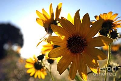 Photograph - Roadside Sunshine by Martha Burton