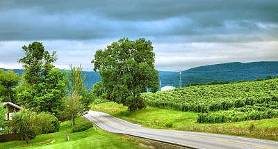 Pastoral Vineyard Photograph - Roadside Vineyard by Steven Ainsworth