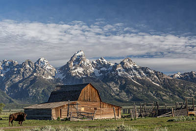 Photograph - Roaming The Range by Jon Glaser