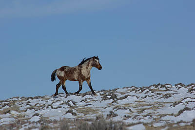 Photograph - Roan In Skyline by Angelique Rea