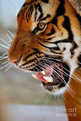 Photograph - Roar by Anjanette Douglas