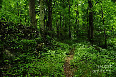 Art Print featuring the photograph Roaring Fork Trail by Debbie Green