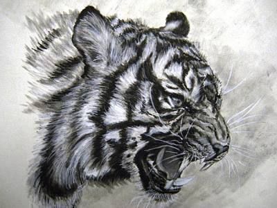 Drawing - Roaring Tiger by Lori Ippolito