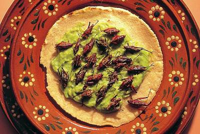 Grasshopper Wall Art - Photograph - Roasted Grasshoppers And Avocado On Tortilla by Peter Menzel/science Photo Library