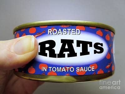 Photograph - Roasted Rats In Tomato Sauce by Renee Trenholm