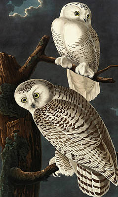 Robert Havell After John James Audubon American Art Print