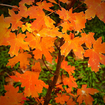 Photograph - Robert Melvin - Fine Art Photography - Autumn Orange by Robert Melvin