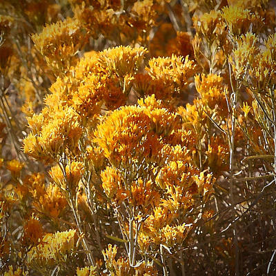 Photograph - Robert Melvin - Fine Art Photography - Golden Yarrow by Robert Melvin