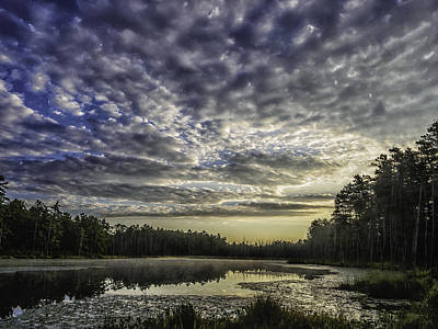 New Jersey Pine Barrens Photograph - Roberts Branch Pine-lands Landscape by Louis Dallara