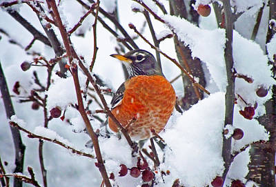Photograph - Robin And The Snow by Duane McCullough