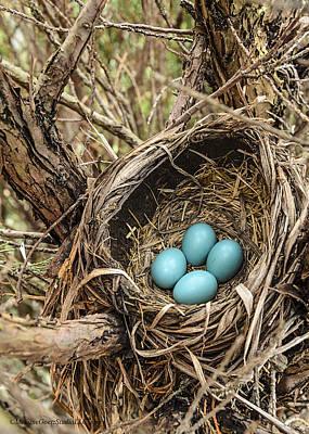 Robin Photograph - Robin Egg Nest Day 2 by LeeAnn McLaneGoetz McLaneGoetzStudioLLCcom
