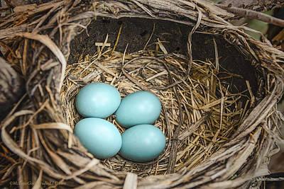 Eggs Photograph - Robin Egg Nest by LeeAnn McLaneGoetz McLaneGoetzStudioLLCcom