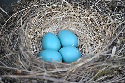 Robin Eggs Original
