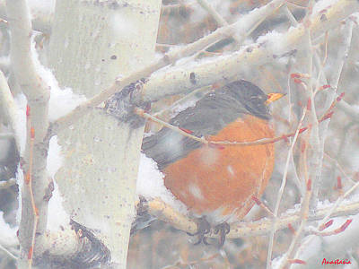 Robin In April Snow Art Print