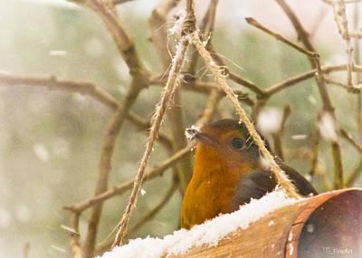 Robin In Winter Art Print by Yvon van der Wijk