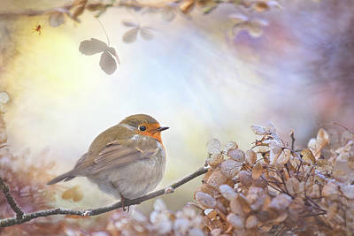 Hydrangea Photograph - Robin On Dreams by
