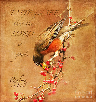 Robin Psalms Thirty-four Art Print by Olivia Hardwicke