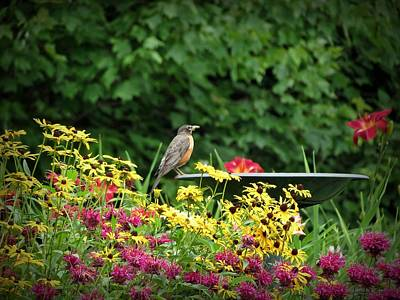 Photograph - Robin With Flowers by MTBobbins Photography