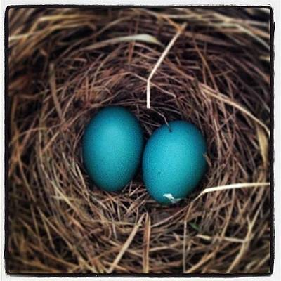 Ornithology Photograph - Robins Egg Blue, The Color Of Spring by Heidi Hermes