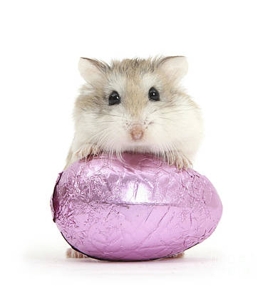 Photograph - Roborovski Hamster And Easter Egg by Mark Taylor