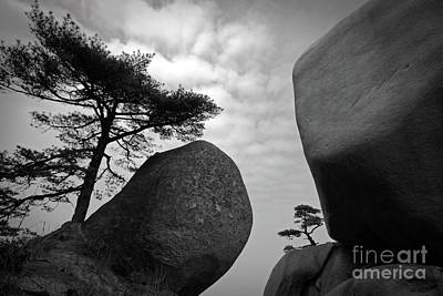 Anhui Photograph - Rock And Pine by Charline Xia