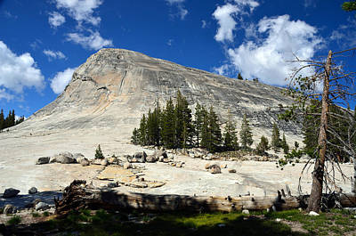 Photograph - Rock And Trees by RicardMN Photography