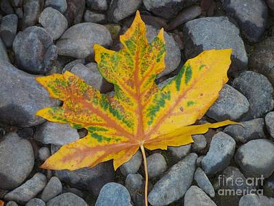 Photograph - Rock Creek Leaf by Chalet Roome-Rigdon