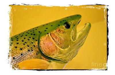 Artistic Fish Abstraction Photograph - Rock Creek Rainbow by Lauren Leigh Hunter Fine Art Photography