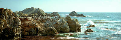 Point Lobos Photograph - Rock Formations At A Coast, Bird Rock by Panoramic Images