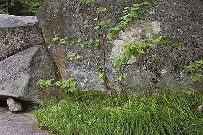Rocks Digital Art - Rock Garden By The Falls by Peter J Sucy
