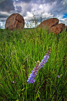 Rock N The Lupine Print by Peter Tellone