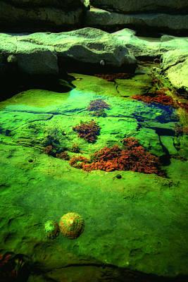 Wales Photograph - Rock Pool At Llantwit Major 2 by Robert J Taylor