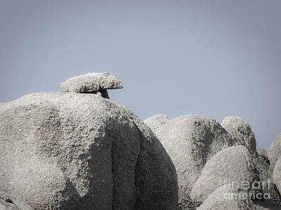 Photograph - Rock Squirrel by Marianne Jensen
