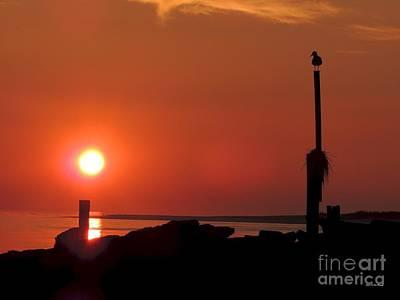 Photograph - Rock Sun Bird by Laurence Van Oliver