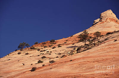 Rock Trees And Deep Blue Sky Print by Liz Leyden