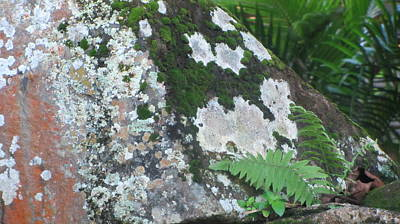 Photograph - Rock With Moss by Anita Burgermeister