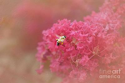 Photograph - Rockin Pink Bee by Peggy Franz