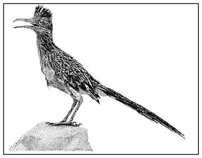Animals Drawings - Rockin Roadrunner by Jack Pumphrey