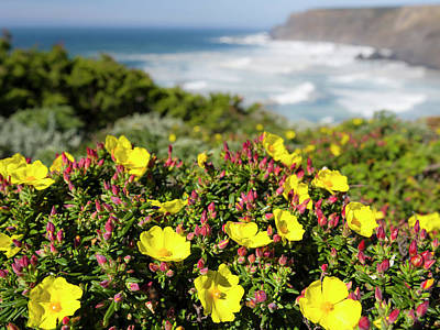 Algarve Wall Art - Photograph - Rockrose At The Costa Vicentina by Martin Zwick