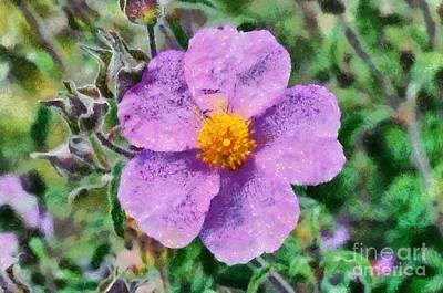 Painting - Rockrose Wild Flower by George Atsametakis
